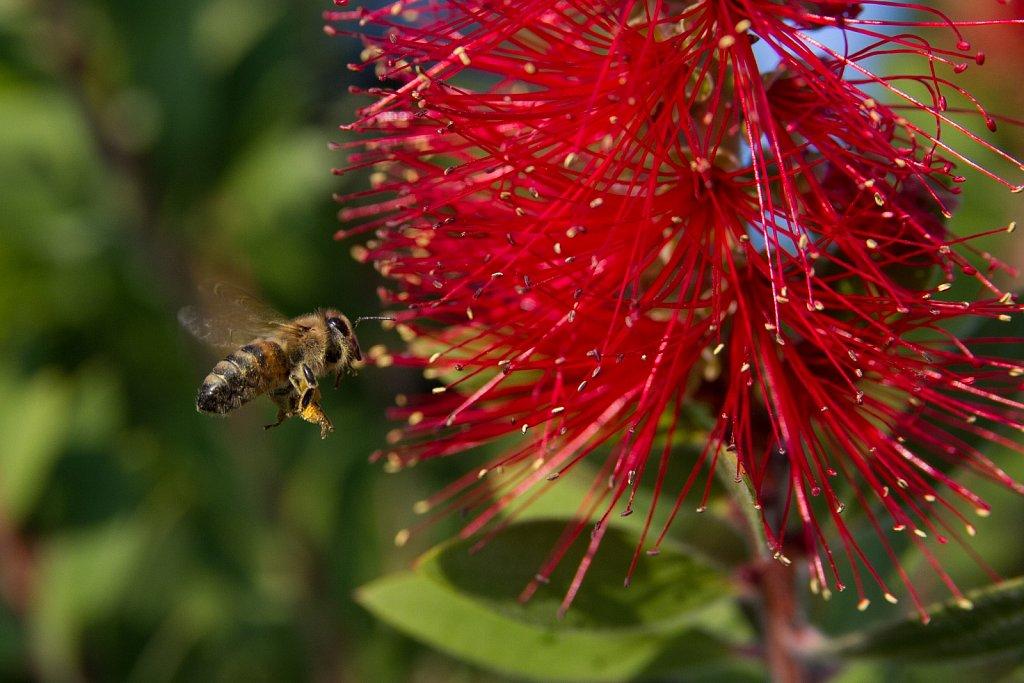 Töökas mesilane