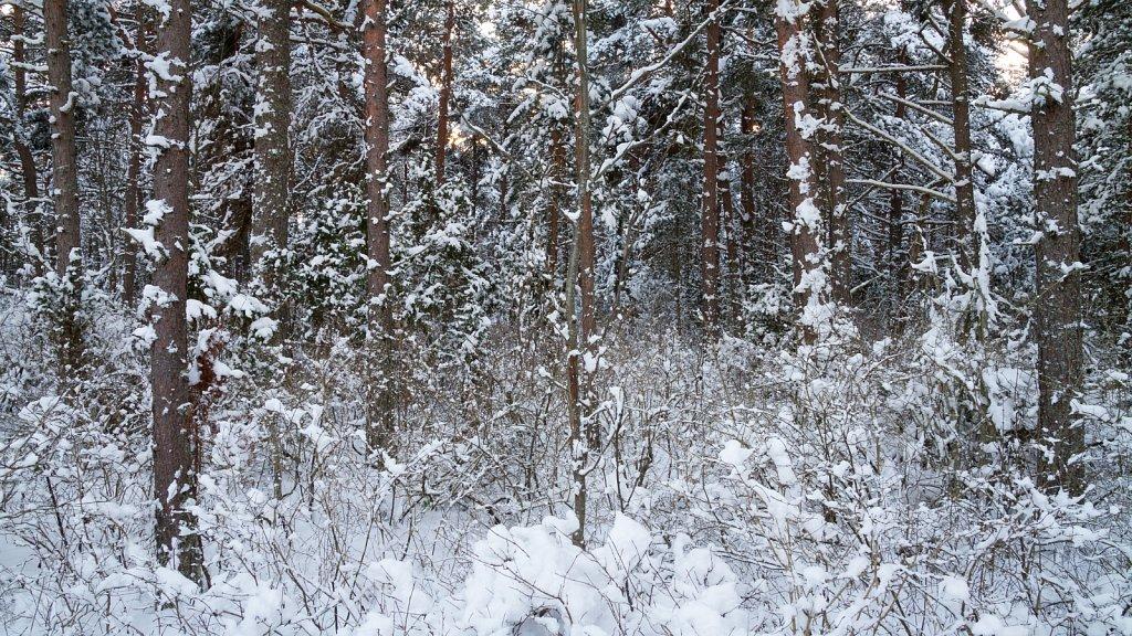 Lihtne kirju mets